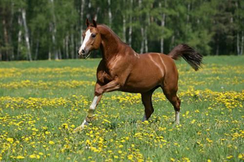 Праздник лошадей