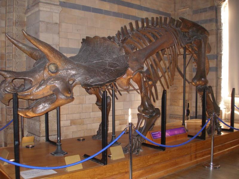 Найдены новые виды динозавров