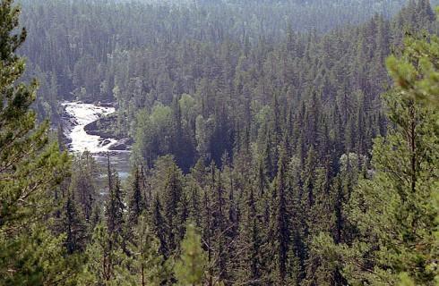 Больше шансов восстановить леса