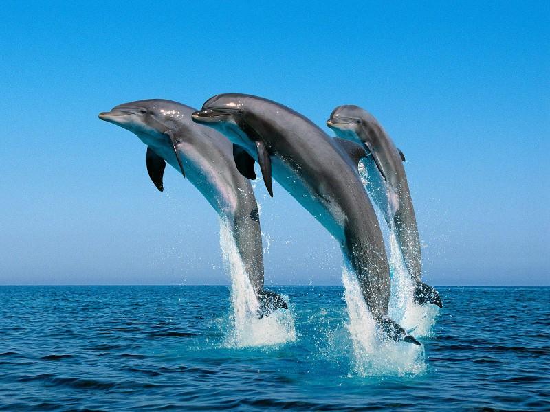 У дельфинов есть сверхспособности