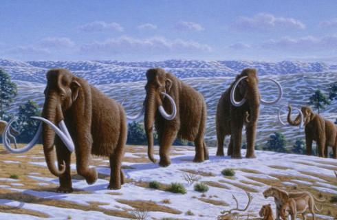 И мамонты пойдут по Земле…