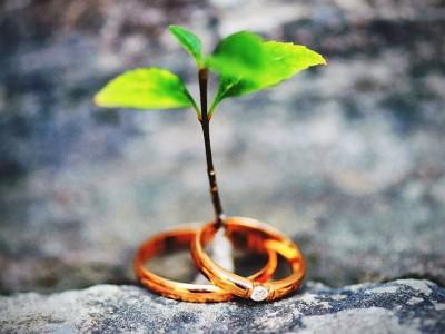 Свадьба двух деревьев