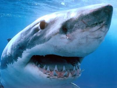 Пресноводная акула
