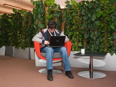 Офисные растения