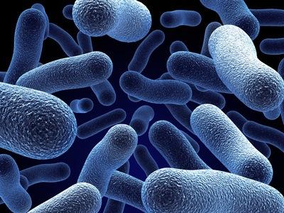 Бактерия бессмертия