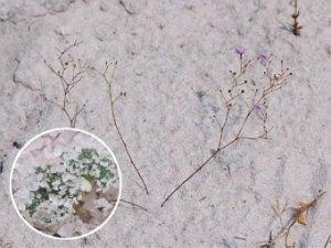 Растения-хищники были однаружены под землей