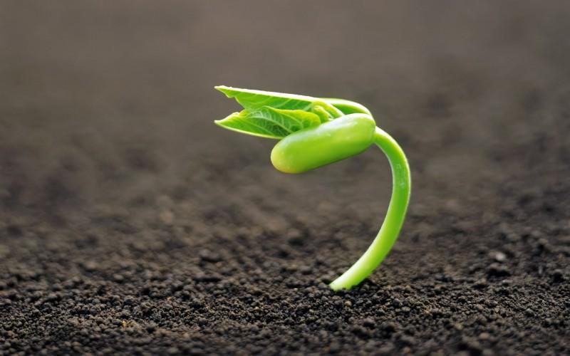 Растения умеют разговаривать