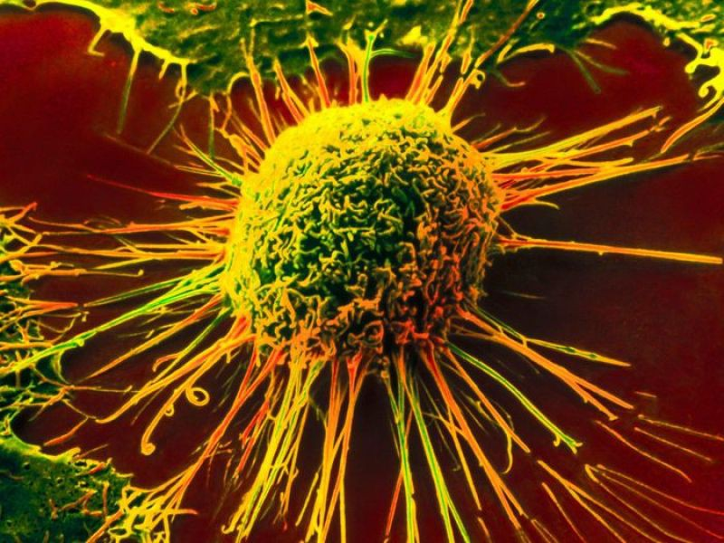 Иммунитет научили бороться с раком
