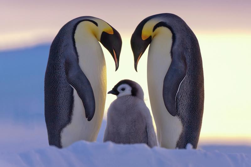 Пингвинов посчитали из космоса