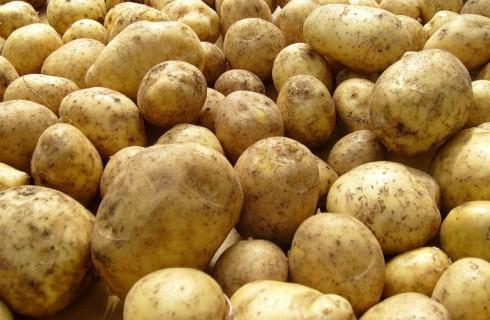 Картофель с Ямала