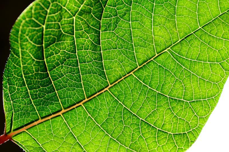 Энергия фотосинтеза