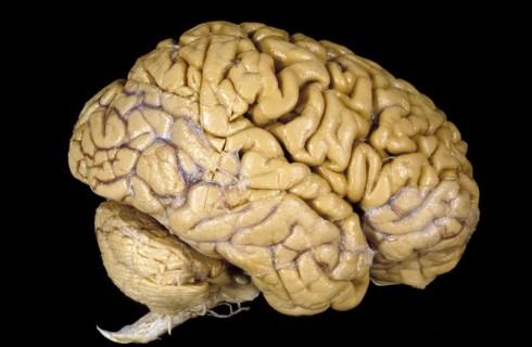 Мозг трудоголика и лентяя отличается друг от друга