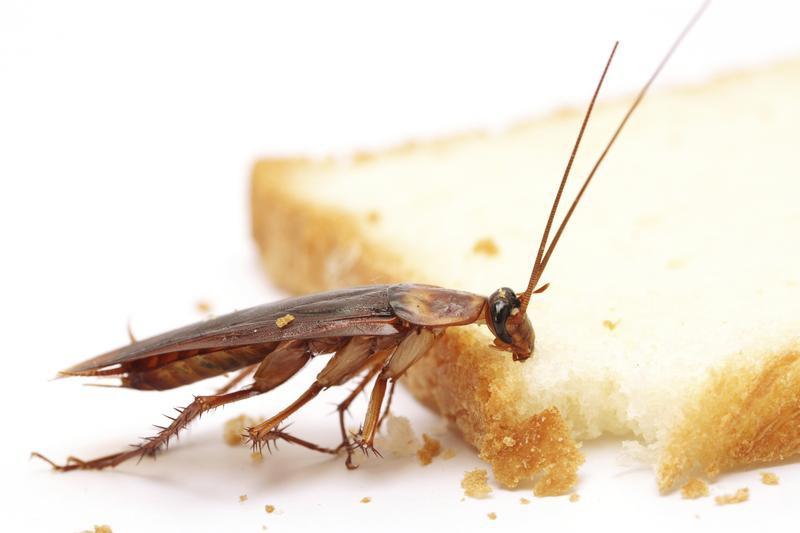 Тараканов нужно любить
