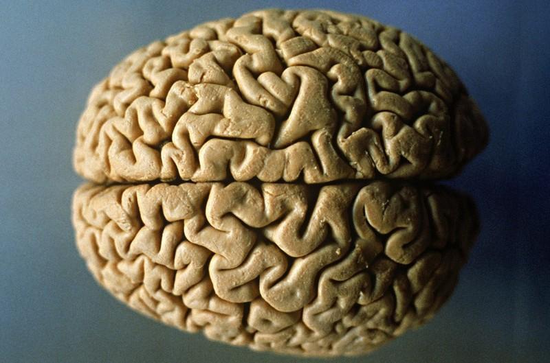 Мозг человека может не стареть