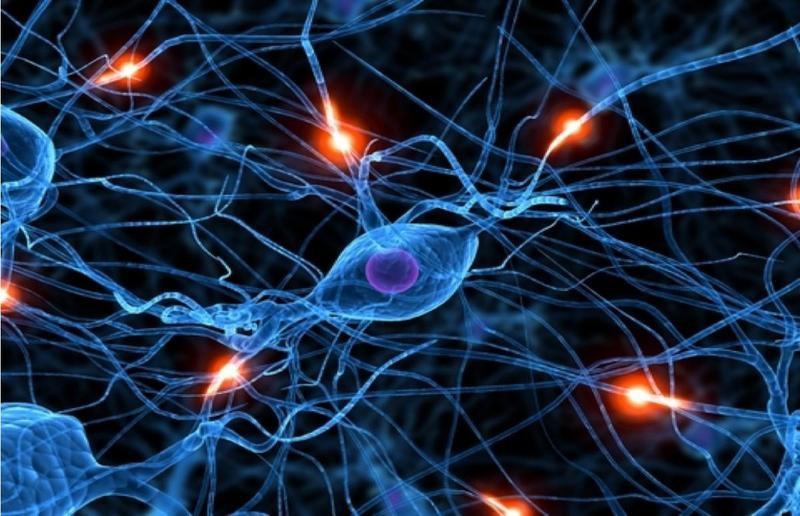Как устроена «канализация» в мозге