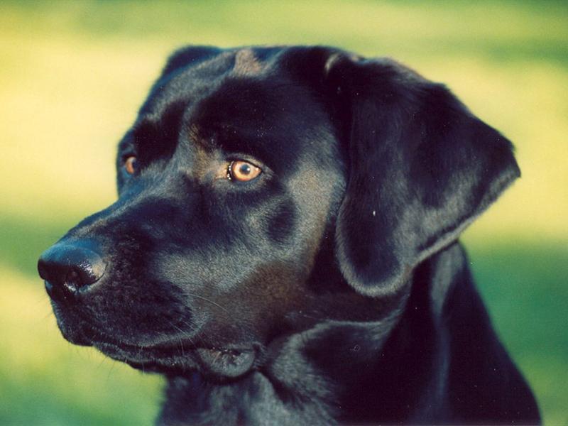 Джаз — собака-экстрасенс
