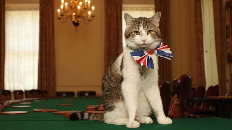 Новый главный мышелов Британии