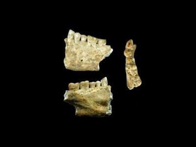 Фрагмент челюсти с древнейшей пломбой