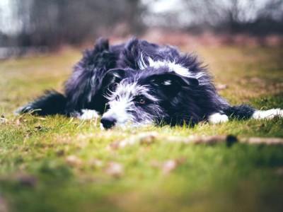 Самая богатая собака в мире — дворняжка Кикко