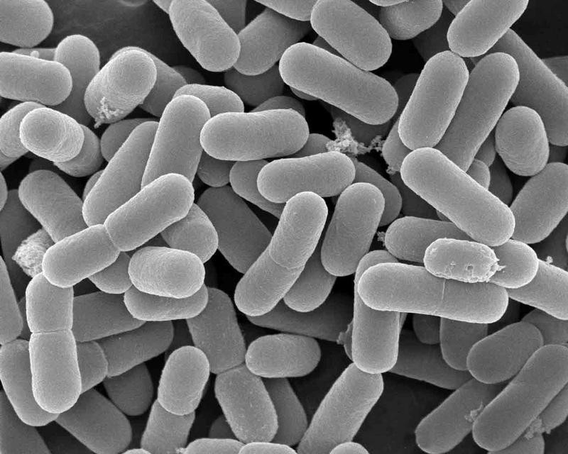 Микробы-мигранты