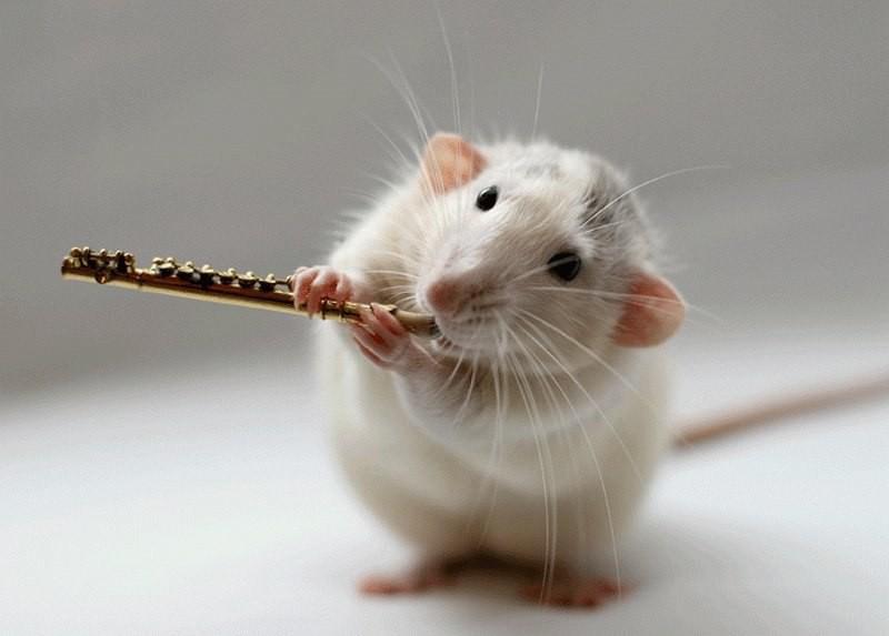 Спой, мышка, не стыдись!