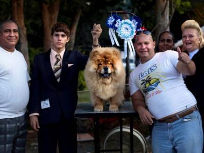 Чау-чау Пако — победитель Fall Canine Expo 2012