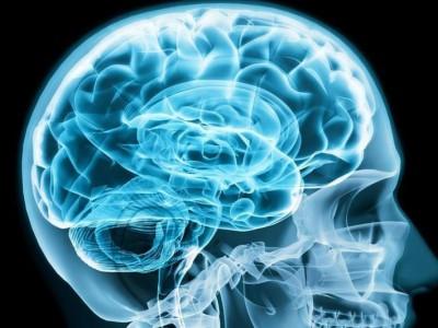 Благодаря физическим нагрузкам, улучшается приток крови в мозг