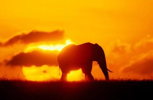 Слоны — мои разговорчивые друзья