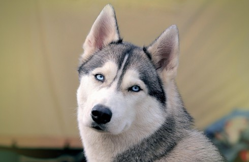 Собаки помогают бороться с сонливостью