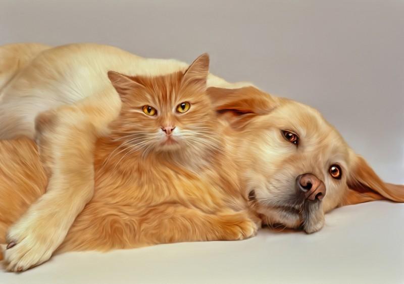 Наши отношения с собаками и кошками