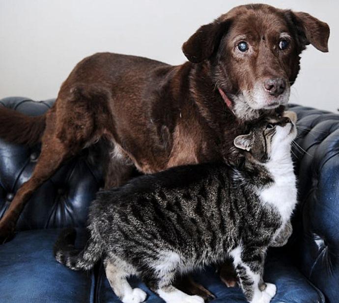 Кошка подарила псу вторую жизнь