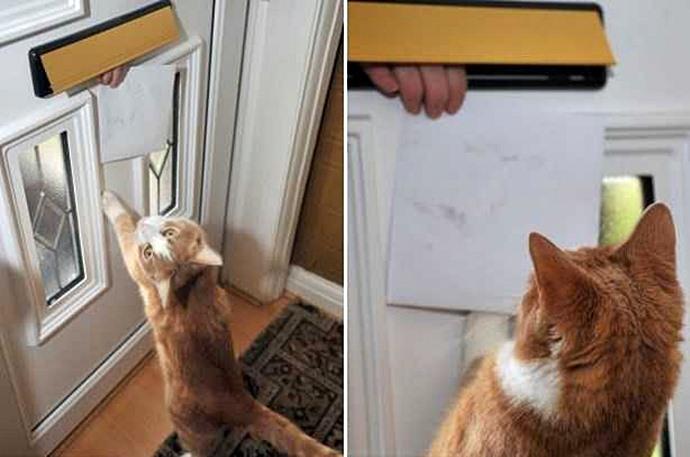 Кот гроза почтальона