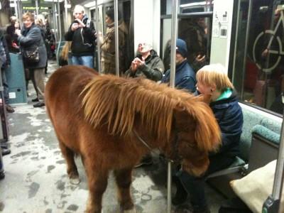 Пони в метро Берлина