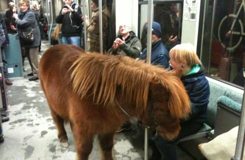 Пони прокатилось в метро