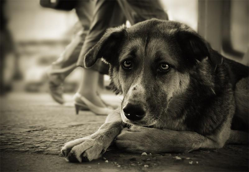 Коляски для животных инвалидов