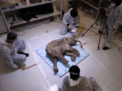 Клонирование мамонтенка