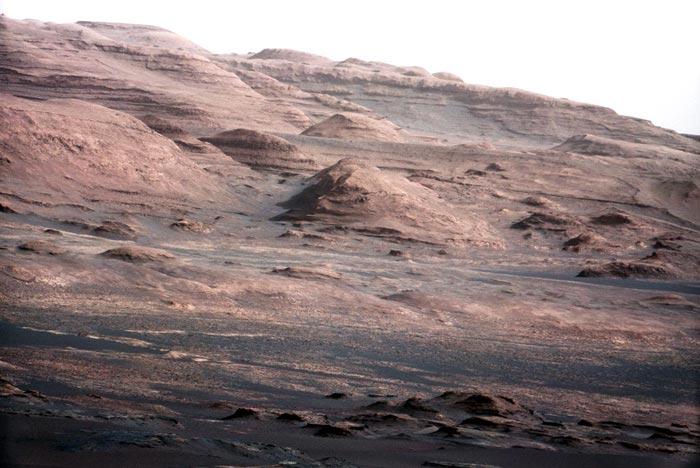 На Марсе найден цветок