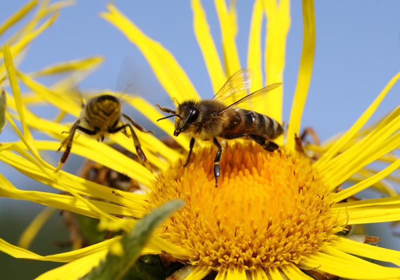 Школа обучения пчеловодству