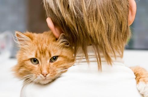 Пожилые кошки: советы по правильному кормлению от «ЗООшеф»