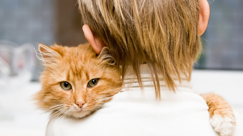"""Пожилые кошки: советы по правильному кормлению от """"ЗООшеф"""""""