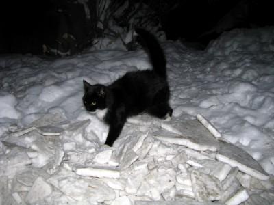 Кошка спасла замерзающего мальчика