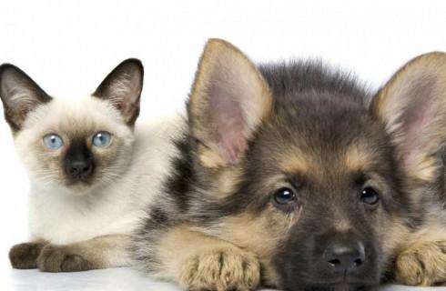 На страже прав животных