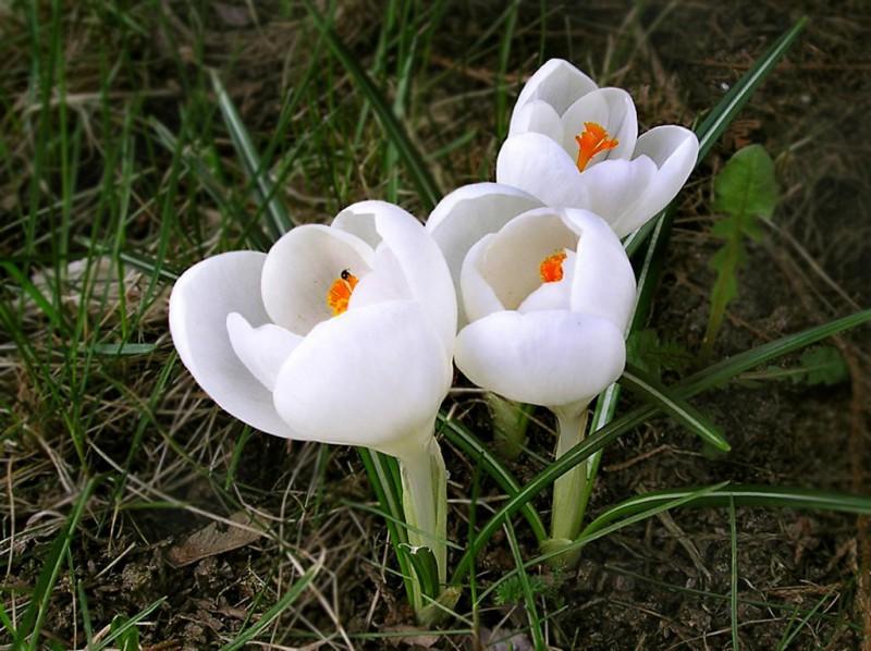 Цветы полезны для здоровья