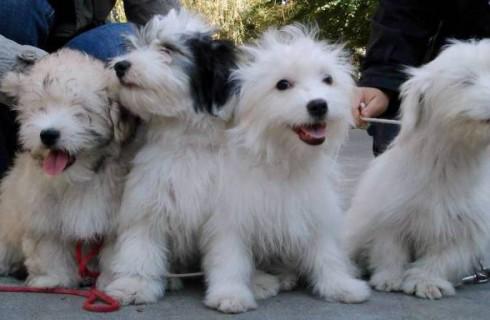 В Одессе была выведена новая порода собак