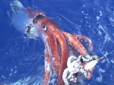 Японцы засняли гигантского кальмара