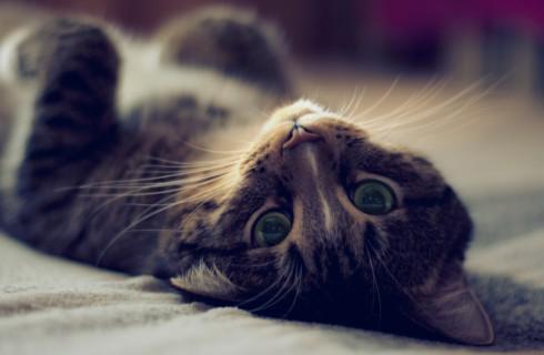 Кошка известила хозяина о грабителе