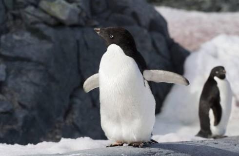 Пингвины показали людям как надо рыбачить