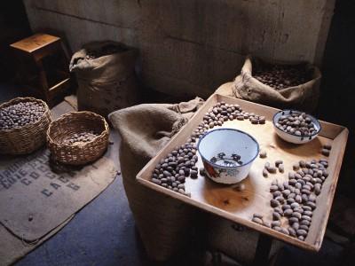 Ученные нашли следы древнего шоколада