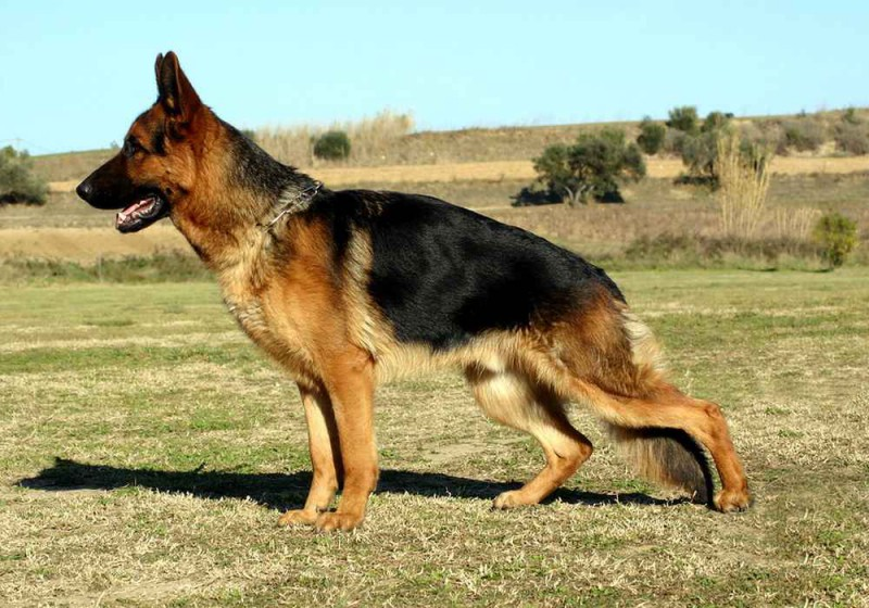 Полицейского пса заставили написать рапорт