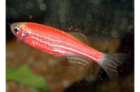 Ученые увидели, как думает рыба, когда охотится
